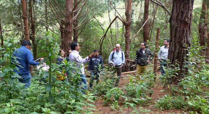 Forskere fra Technische Universität München studerer en plantet skog i Ecuador. Slike skoger er eneste måte å bruke jorda på etter at standhaftige ugress har tatt over for beitemarker. (Foto: Carola Paul, Technische Universität München)