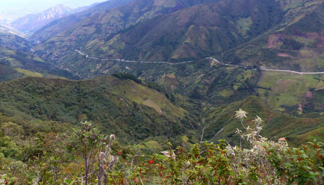 En blanding av jordbruk, skogbruk og brakkland gav mindre risiko og jevnere produksjon, viser tyske studier fra dette området rundt Loja i Ecuador. Også våre landskap kan ha bruk for en slik tankegang, mener norsk forsker. (Foto: Carola Paul, Technische Universität München)