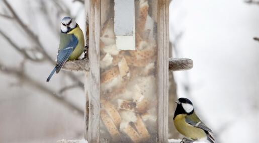Tror flere dyr ikke klarer tilpasse seg raskt nok til klimaendringene