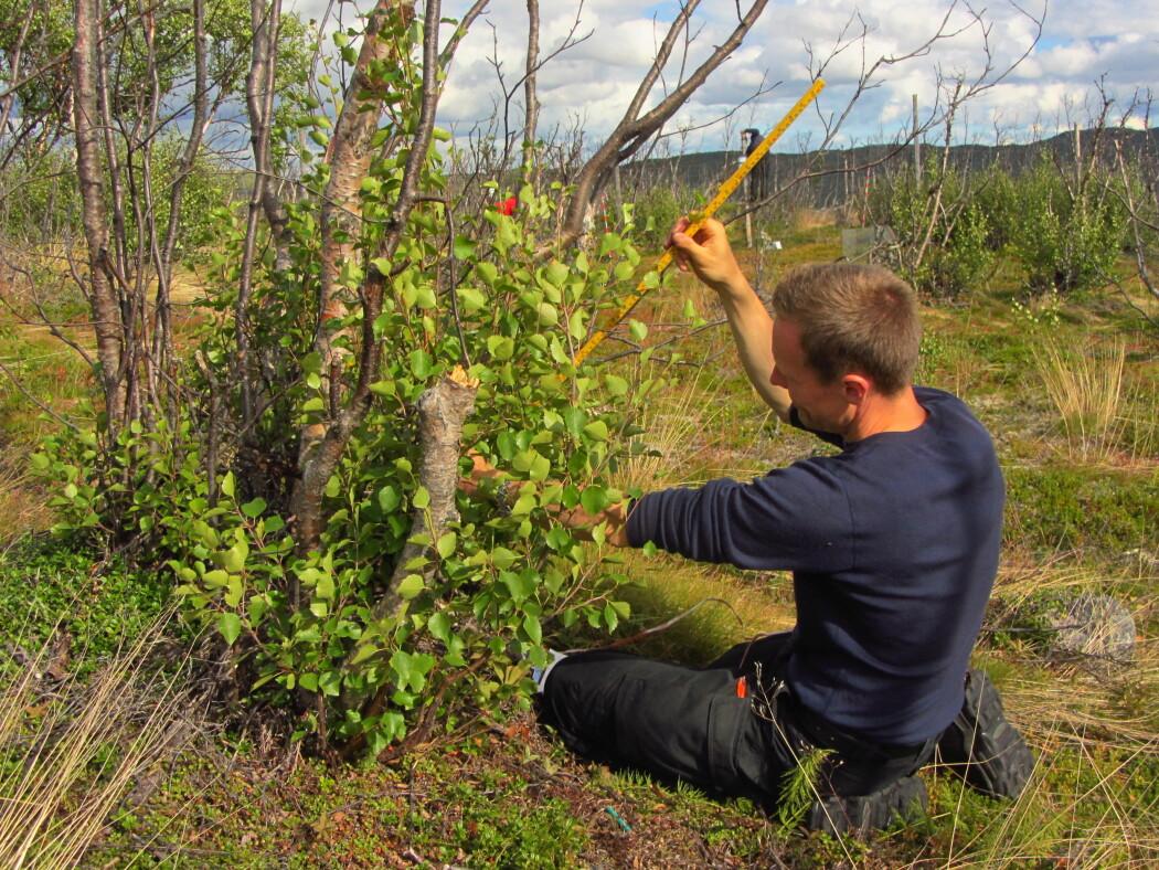 Biolog Ole Petter Laksforsmo Vinstad undersøker hvordan skogen i Finnmark utvikler seg. (Foto: Malin Ek)