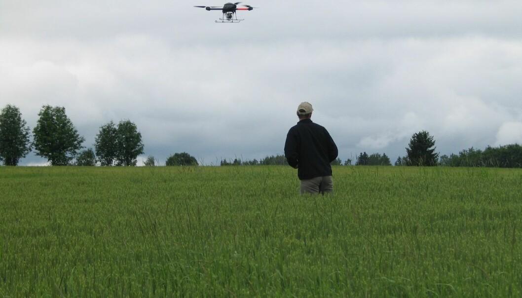 Droner med varmesøkende kamera kan påvise soner i åkeren som har høyere temperatur enn omgivelsene. Plantene blir nemlig varme ved sykdom og stress.  (Foto: Audun Korsæth)