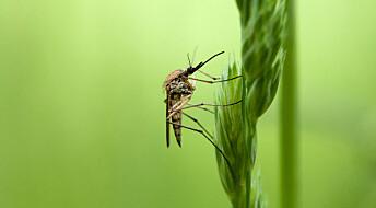 Hva skjer med blomster og fugleliv når massevis av mygg blir drept i moderne feller?