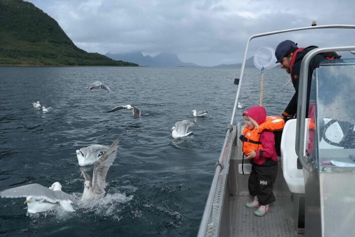 Selv om det blir mindre feltaktivitet, er det andre fine måter å komme tett på sjøfugler, også sammen med familien. (Foto: Signe Christensen-Dalsgaard)