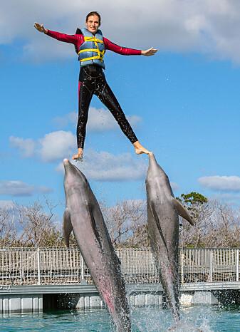 Delfiner i fangenskap kan trenes til å gjøre imponerende triks. (Foto: Sergey Uryadnikov / Shutterstock / NTB scanpix)