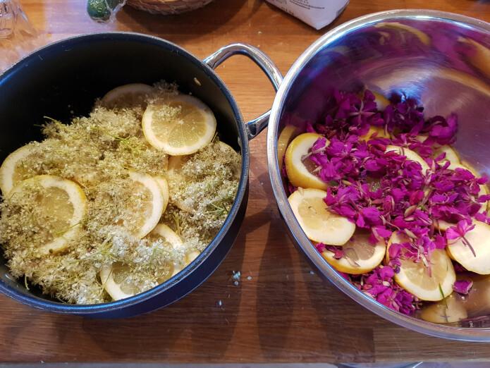 Blomster og sitron klare for kokende vann. Deretter skal det lagres kaldt noen dager før sukkeret tilsettes. Foto: Magni Olsen Kyrkjeeide