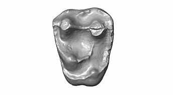 Denne tannen tilhørte en knøttliten ape for 18 millioner år siden