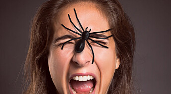 De største fobiene for farlige dyr: Vi er mest redde for edderkopper