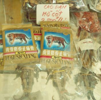 Tigerknokler og tørkede sjøhester selges som kinesisk medisin. (Foto: Science Photo Library, NTB scanpix)