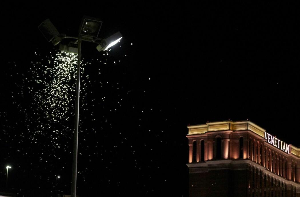 Det snør ikke i Las Vegas, de hvite fnuggene under lyktestolpen er gresshopper. (Foto: Bridget Bennett / AFP / NTB Scanpix)