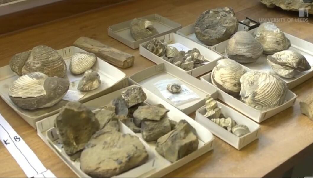 Omkring 66 millioner år gamle fossiler har avslørt at det marine livet i Antarktis også ble hardt rammet da en meteor slo ned på jorden. (Foto: University of Leeds/stillbilde fra YouTube)