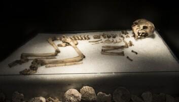 Et beifragment fra hodeskallen til Vistegutten er sendt til DNA-analyse for å fastslå om det virkelig er en gutt som ble funnet i Vistehåla utenfor Stavanger i 1907.  (Foto: Terje Tvedt, Arkeologisk museum, UiS)