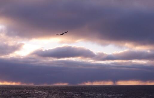 Året rundt i Barentshavet