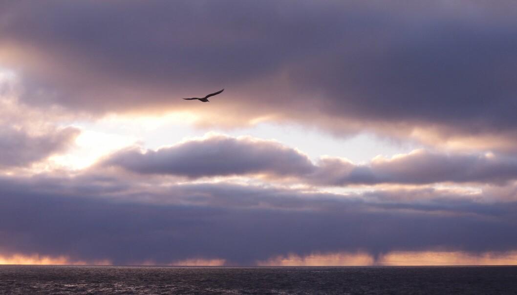Mens vi fortsatt nyter sommeren i Norge, forberede planter og dyr i det nordlige Barentshavet seg på vinteren. (Foto: Vårin Trælvik Eilertsen / UiT / The Nansen Legacy)