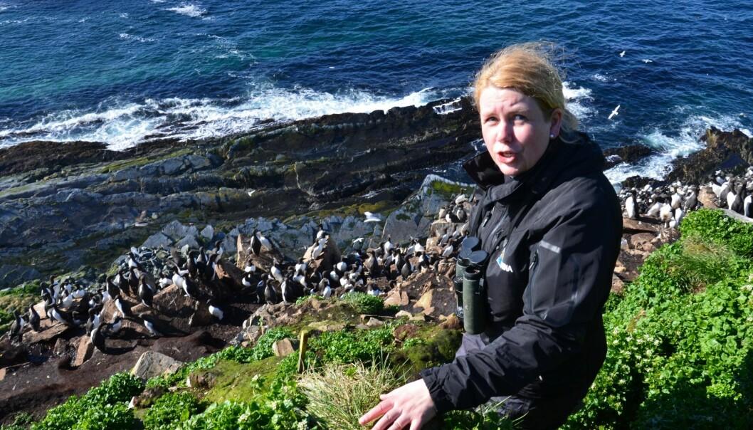 Tone Reiertsen oppe i fuglefjellet på Hornøya utenfor Vardø. Hun er en av forskerne som i sommer skal lære folk mer om sjøfugl og forskningen på dem.  (Foto: Helge M. Markusson, Framsenteret)