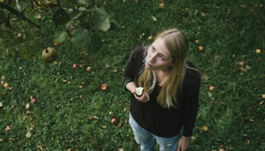 Vitamininnholdet i epleskallet er like høyt som i resten av eplet til sammen. Men det er derimot stor forskjell på hvor mye C-vitamin det er i de ulike eplesortene.  (Foto: Kniel Synnatzschke/Plainpicture)