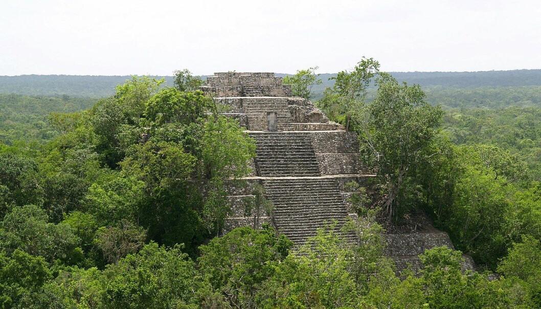 Pyramide i Calakmul, et viktig Maya-område i nærheten av grensa til dagens Guatemala. (Illustrasjonbilde: PhilippN/CC BY-SA 3.0)