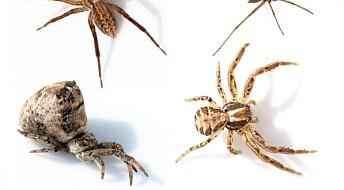 Dette visste du kanskje ikke om edderkopper