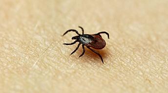 Langt flere smittes med flåttsykdommen borreliose enn offentlige tall skulle tilsi