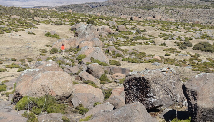 Store kampesteiner som har blitt dratt med isbreene som var i området. (Bilde: H. Veit)