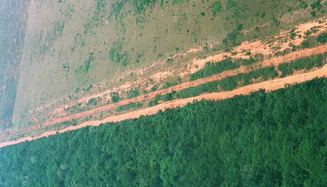 Avskogingen i Amazonas var svært omfattende på 1990-tallet. Dette bildet fra den brasilianske regnskogen ble tatt i 1996. (Foto: Lars M. Hjorthol / NTB scanpix)