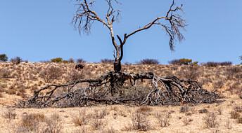 Planting av trær kan gi mer vann
