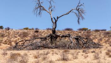 – Våre resultater viser at moderate mengder trær faktisk kan øke grunnvannsmagasinene, sier NMBU-professor Douglas Sheil. Dette er stikk i strid med det forskere hittil har trodd. (Illustrasjonsfoto: Colourbox)