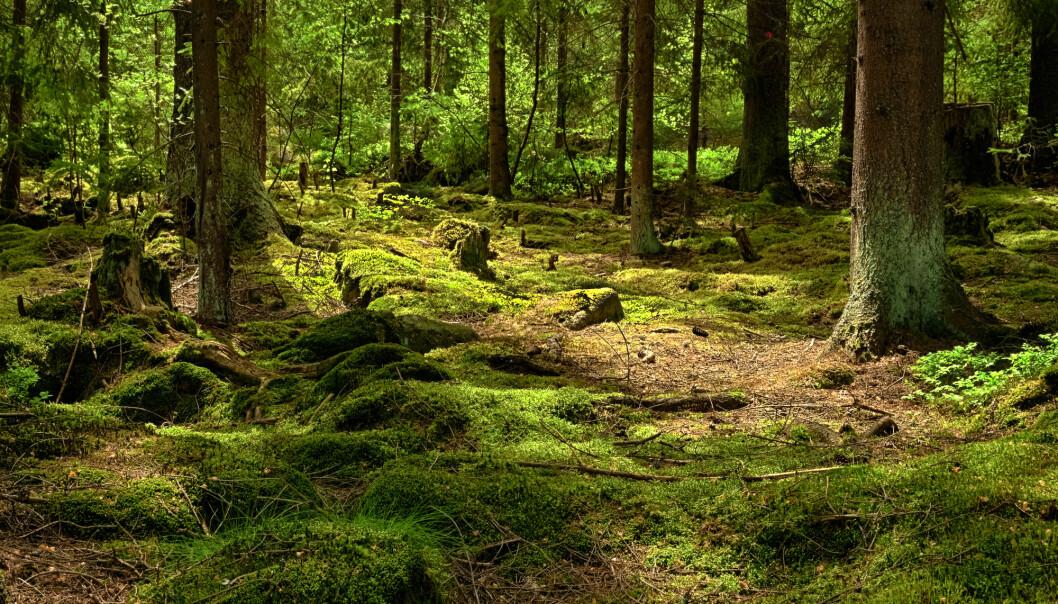 Klima og karbonets kretsløp: Slik er livet på jorda med på å regulere klimaet