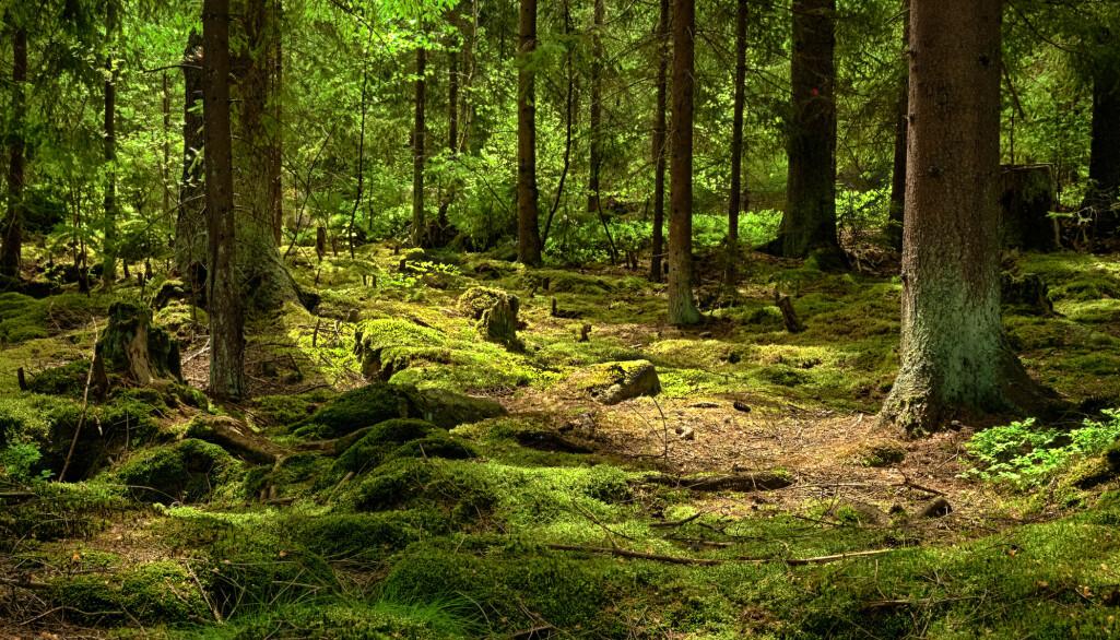Soppen i norske skoger har stor betydning for karbonlagringen i bakken. (Foto: kropic1 / Shutterstock / NTB scanpix)