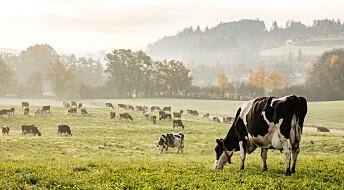 Ny rapport fra FNs klimapanel: Mindre kjøtt og mer skog må til for å takle klimakrisen