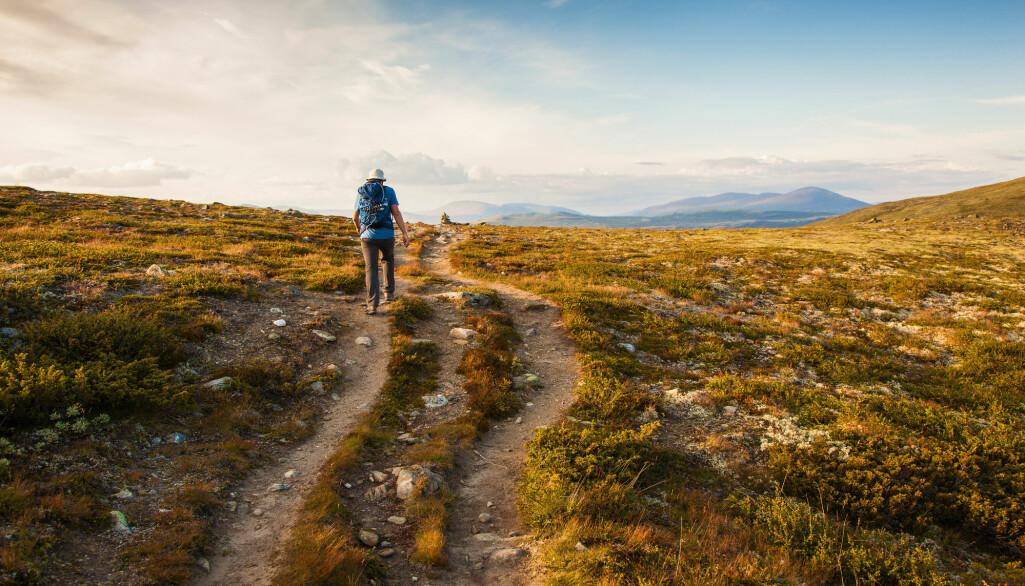 Skal du besøke Dovre eller Dombås? (Foto: Olga Miltsova / Shutterstock / NTB scanpix)