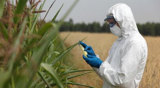 Kronikk: Slik bruker vi GMO på en ansvarlig måte