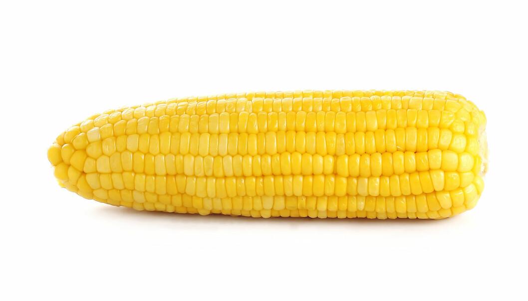 Hvorfor er GMO samfunnsnyttig?