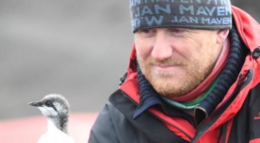 Teller sjøfugl på Jan Mayen