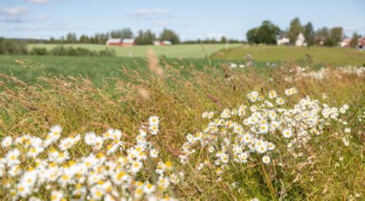 Mindre åkre med varierte avlinger gir mer liv og mer mat