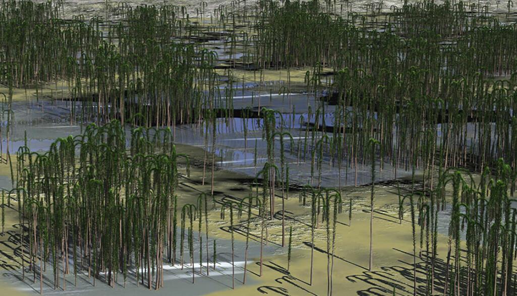 Trærne vokste tett i grupper, trolig var de avhengige av god tilgang på vann. (Illustrasjon: Wang and Qin et al./Current Biology).