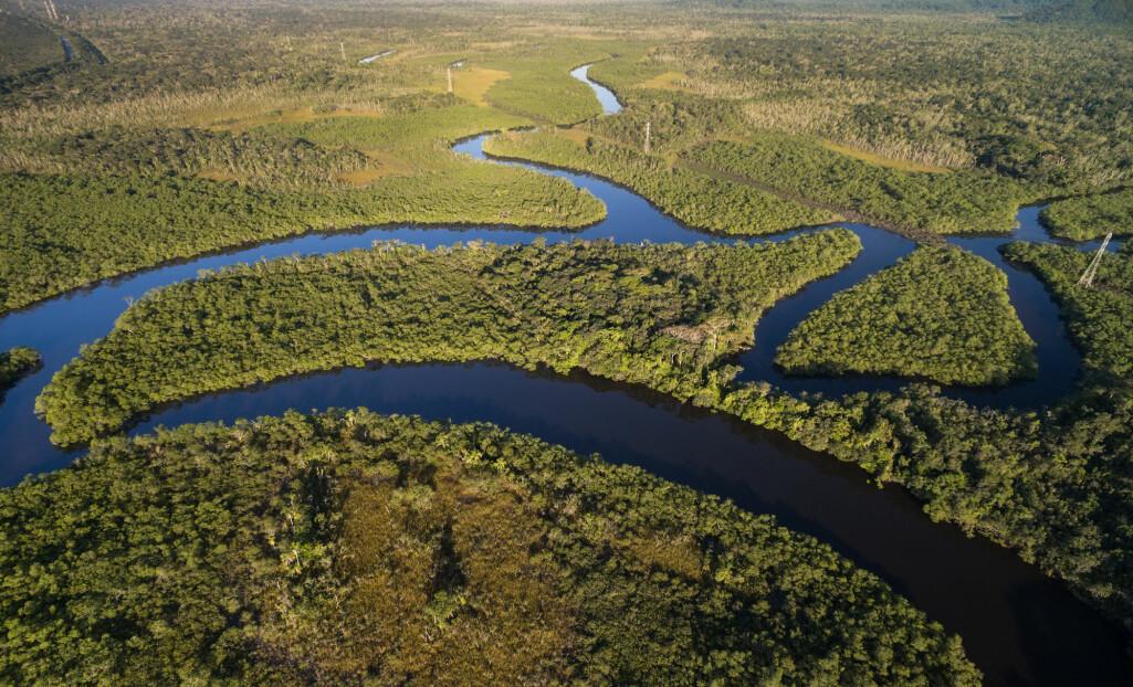 Fortsatt storstilt ødeleggelse av Amazonas-regnskolen kan føre til at transportsystemet for vann forstyrres i så stor grad at store deler av skogen blir om til savanne. (Foto: Gustavo Frazao / Shutterstock / NTB scanpix)