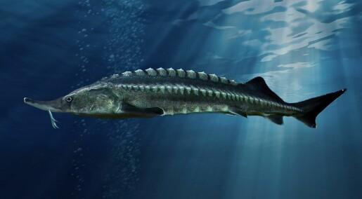 Mange store dyr i ferskvann er i ferd med å utryddes