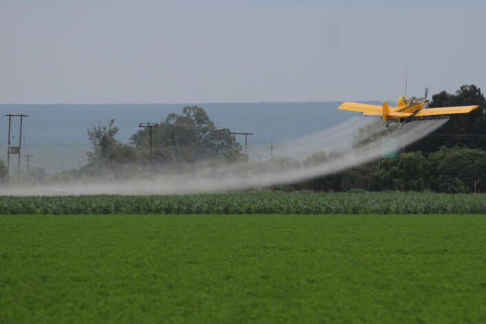 Norge vurderer import av genmodifiserte planter, hvorav over 80 prosent er sprøytemiddeltolerante, de sprøytes med Roundup i vekstsesongen. (Foto: Thomas Bøhn)