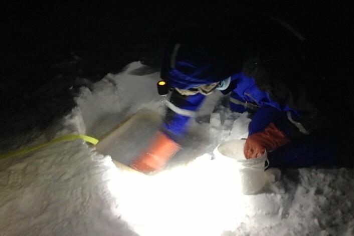 Slapsete vegger av snø rundt boksene holdt vannet inne til det rakk å fryse til. (Foto: Brage B. Hansen, NTNU)