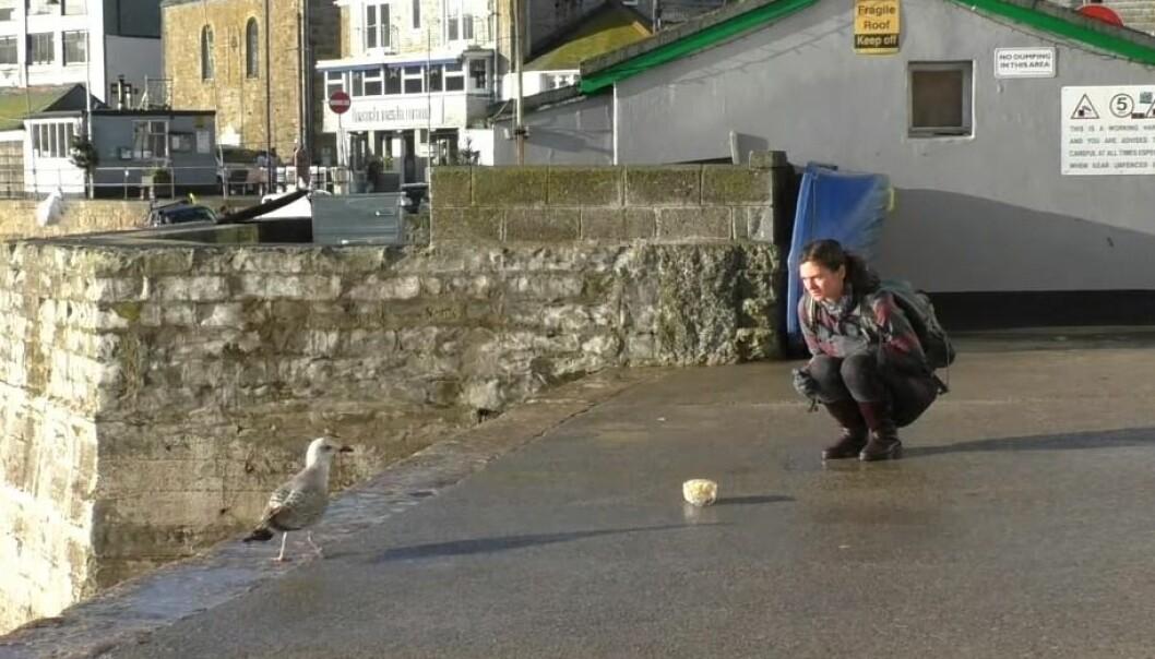 """""""Det var da voldsomt som den forskeren stirret?!"""" (Bilde fra videoen fra University of Exeter)"""