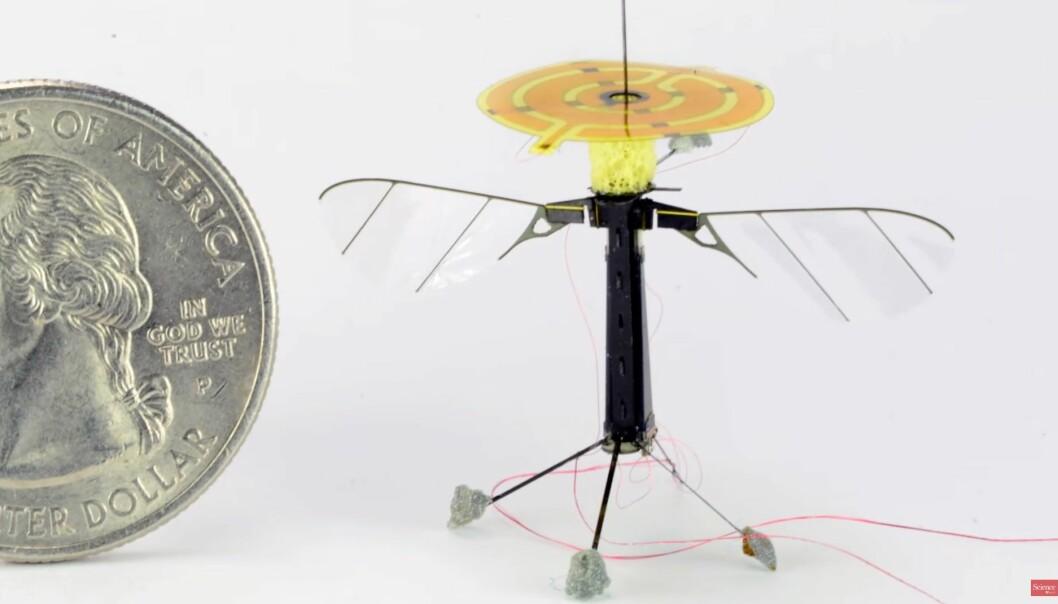 Den knøttlille roboten skal kunne feste seg til mange forskjellige materialer. (Foto: Science AAAS/Skjerdump)