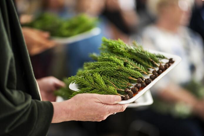 Kartlegger bruk av planter fra vikingtiden