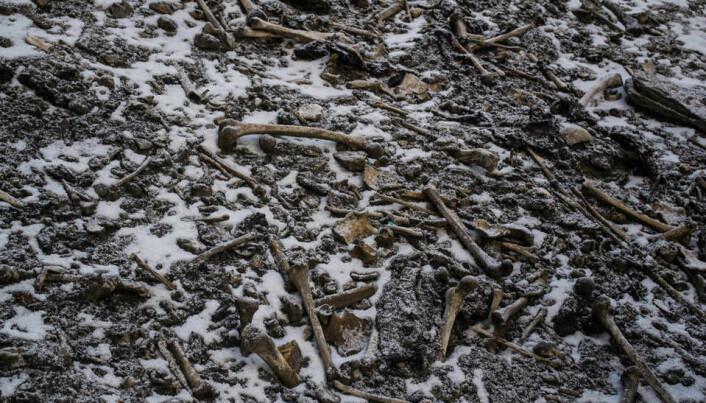 Menneskeknokler ligger strødd rundt innsjøen. (Bilde: Himadri Sinha Roy)