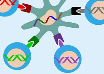 I midten ser vi en syntetisk DNA-streng med kreftmutasjoner som er plassert inn i en immunstimulerende celle fra en frisk person. Kulene med ulike farger viser immunceller som gjenkjenner mutasjonene og kobler seg på cellen for å bekjempe dem. (Foto: (Illustrasjon: Science Shaped))