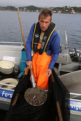 Havforsker Tore Johannessen ser stadig mindre av favorittmaten til torskeyngelen. (Foto: Espen Bierud / Havforskningsinstituttet)