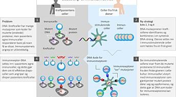 Outsourcer immunforsvaret for å bekjempe kreft