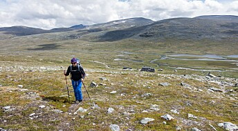 Norges høyeste registrerte tregrense målt på 1404 meter