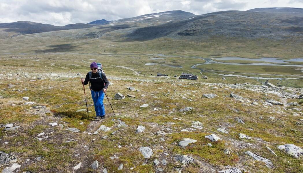 Det er her i Jotunheimen at tregrensen i Norge er aller høyest. (Foto: Gorm Kallestad, NTB scanpix)