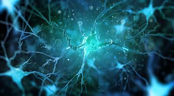 Svenske forskere har oppdaget et nytt smerte-organ