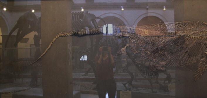 Datainnsamling på museum i München i fjor. Hvor forskjellig er denne fiskeøgla fra våre egne? Jeg kaller bildet Finn paleontologen. Foto: LLD